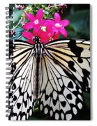 Rice Paper Butterfly On Pink Spiral Notebook
