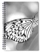 Rice Paper Butterfly Resting For A Second Spiral Notebook