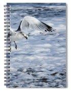 Ring-billed Gull Spiral Notebook