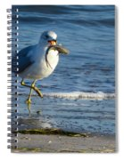 Ring-billed Gull With Its Catch Spiral Notebook