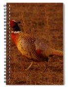 Ring Neck Pheasant  Spiral Notebook