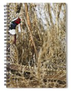 Ring Neck Phesant Spiral Notebook