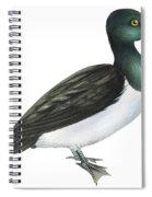 Ring-necked Duck  Spiral Notebook