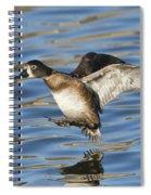 Ring-necked Duck Landing Spiral Notebook