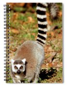 Ring-tailed Lemur Lemur Catta Walking Spiral Notebook