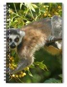 ring-tailed lemur Madagascar 1 Spiral Notebook