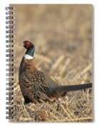 Ringneck Pheasant Rooster Spiral Notebook