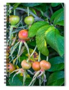Ripe And Ready Spiral Notebook