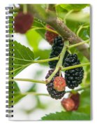 Ripe Mulberry On The Branches Spiral Notebook