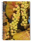 Ripe Seagrapes Spiral Notebook