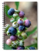 Ripening Blueberries Spiral Notebook