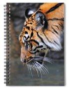 Risk Taker Spiral Notebook