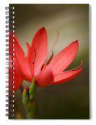 River Lily Spiral Notebook