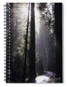 Road Through Redwoods Spiral Notebook