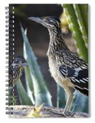 Roadrunners At Play  Spiral Notebook
