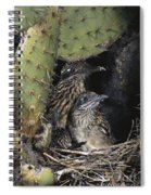 Roadrunners In Nest Spiral Notebook