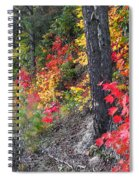 Roadside Fall Colors Spiral Notebook