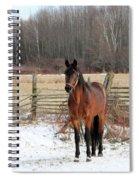Roan Revenge 6 Spiral Notebook