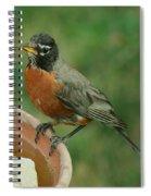 Robin 1 Spiral Notebook