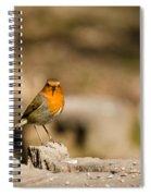 Robin At Feeder Spiral Notebook