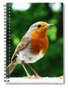 Robin Bird Photograph Spiral Notebook