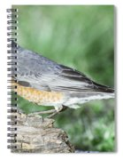 Robin Eating Mealworm Spiral Notebook