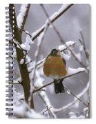 Robin In Snow Spiral Notebook