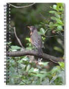 Robin In The Brush Spiral Notebook