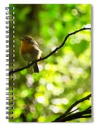 Robin In The Glade Spiral Notebook