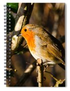 Robin In The Hedgerow Spiral Notebook