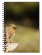 Robin On A Log Spiral Notebook