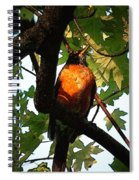 Robin Waiting Spiral Notebook