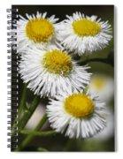 Robin's Plantain Wildflowers - Erigeron Pulchellus Spiral Notebook