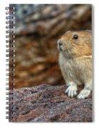 Rock Rabbit Spiral Notebook