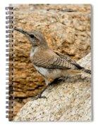 Rock Wren Juvinile Spiral Notebook