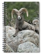 Rocky Mountain Big Horn Spiral Notebook
