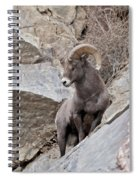 Rocky Mountain Big Horn Sheep Ram Spiral Notebook