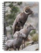 Rocky Mountain Big Horns Spiral Notebook