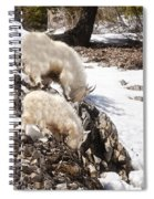 Rocky Mountain Goats - Mother And Baby Spiral Notebook