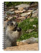 Rodent In The Rockies Spiral Notebook