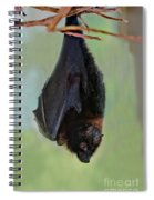 Rodrigues Flying Fox Spiral Notebook