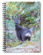 Roe Buck In Woodland Spiral Notebook