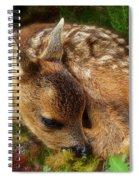 Roe Deer Fawn Spiral Notebook