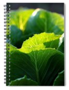 Romaine Study Spiral Notebook