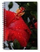 Romance In The Rain Spiral Notebook