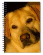 Romantic Pasha Spiral Notebook