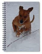 Romp In The Snow Spiral Notebook