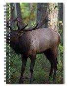 Roosevelt Elk Bugling Spiral Notebook