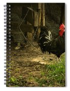 Rooster In The Hen House Spiral Notebook