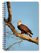Roosting Tree 1 Spiral Notebook